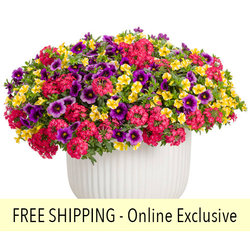 Fruit Salad FLOWER PILLOW®