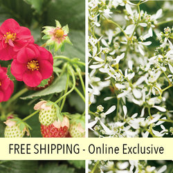 Strawberry Frost FLOWER PILLOW®