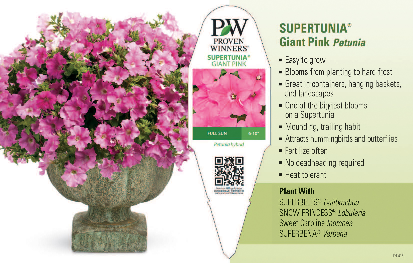 Supertunia Giant Pink Petunia 11x7 Variety Benchcard Proven Winners