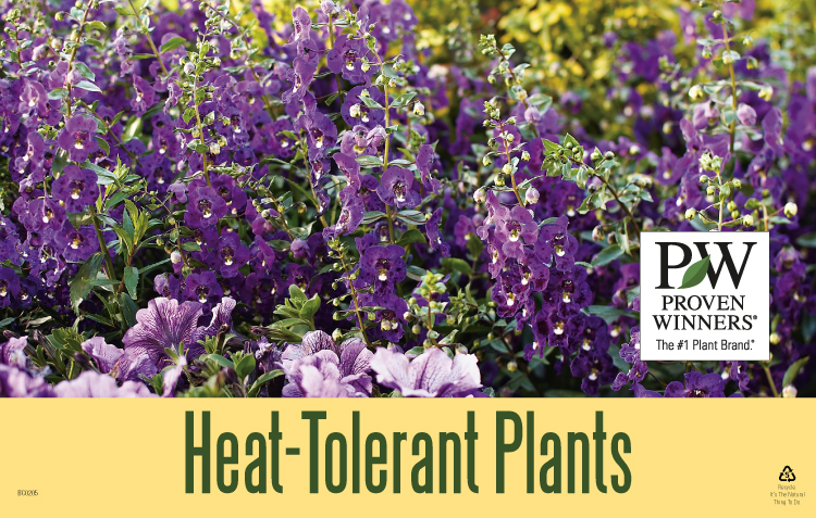 P allen smith container gardening - Heat tolerant plants keeping gardens alive ...