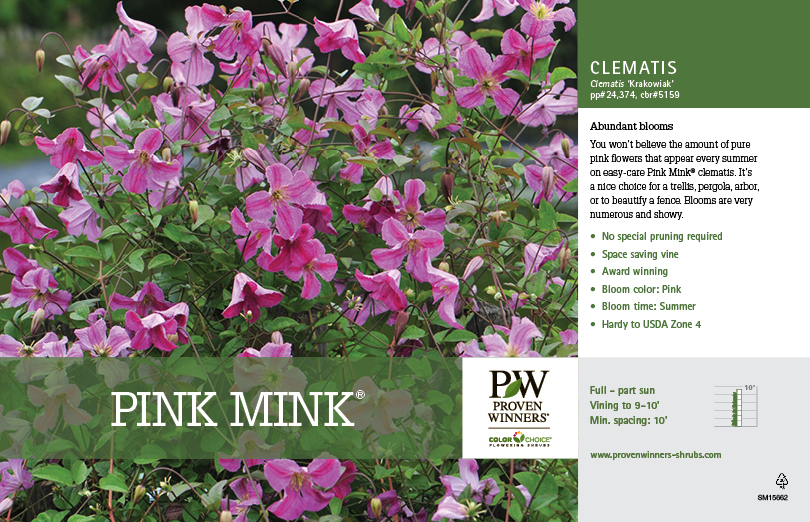 Clematis Pink Mink 174 11x7 Quot Variety Benchcard Proven Winners