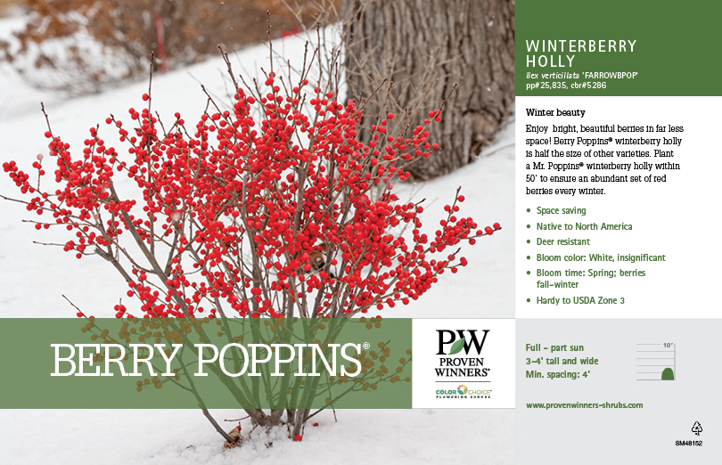 Ilex Berry Poppins 174 Winterberry Holly 11x7 Quot Variety Benchcard Proven Winners