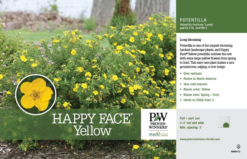 Potentilla happy face yellow bush cinquefoil 11x7 variety potentilla happy face yellow bush cinquefoil 11x7 variety benchcard mightylinksfo