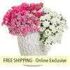 Botanical Bouquet FLOWER PILLOW®