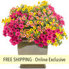 Candy Store FLOWER PILLOW®