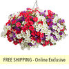 With Liberty FLOWER PILLOW®