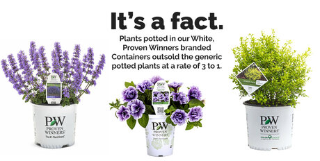 Plants potted in our white, Proven Winners branded containers