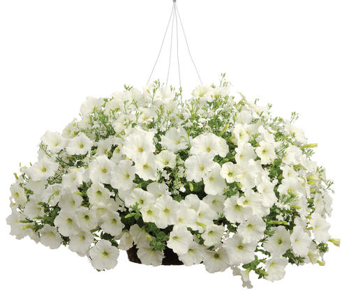 White Wedding Combo