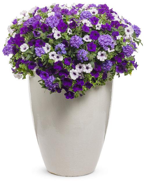 Lilac Festival - cream pot