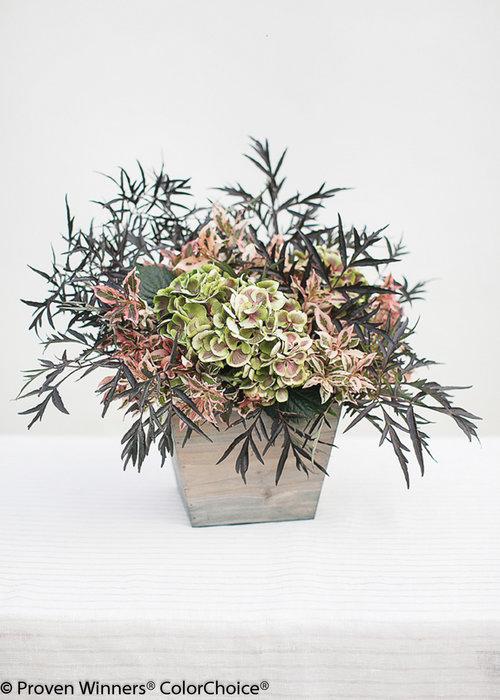 Proven Winners ColorChoice flower arrangement