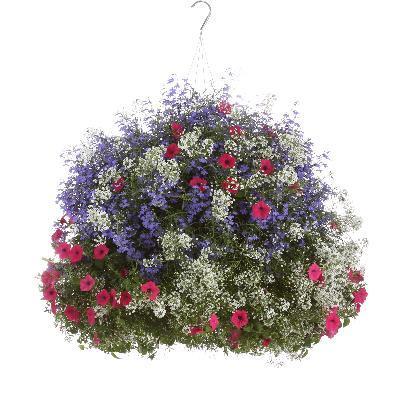 Does Not Represent Imp Vista Fuchsia