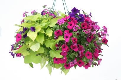 combo_pvg_garden_party.jpg