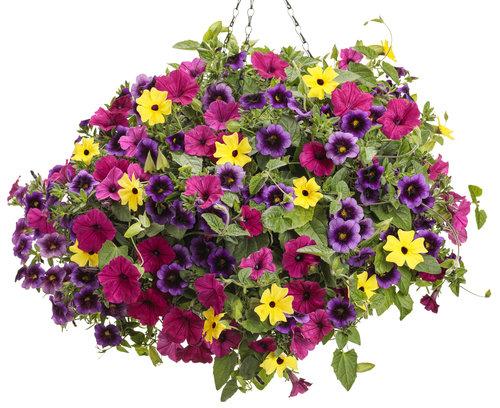flower_bomb.jpg