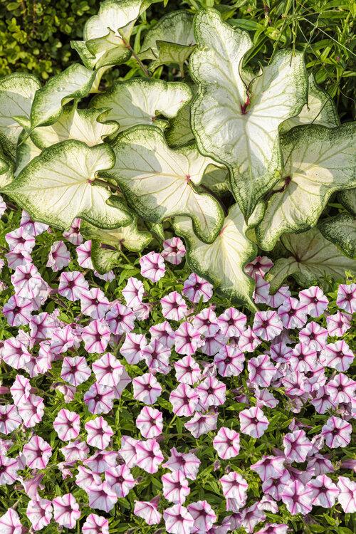 front_porch_garden_137.jpg