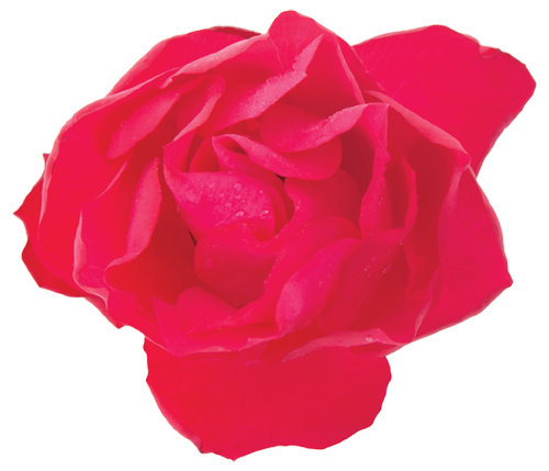 Oso Easy Double Red Rosa
