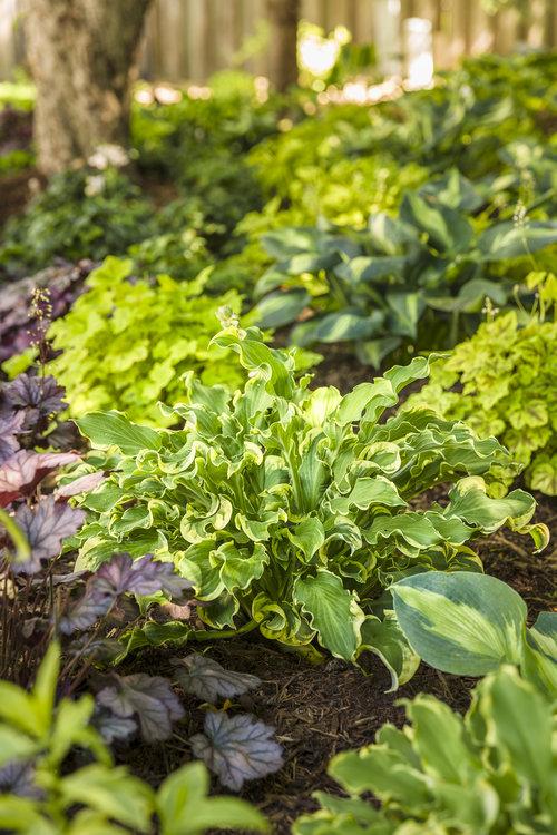 perennials_garden_40.jpg