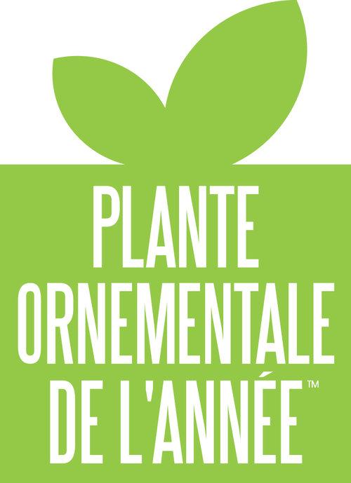 plante_ornementale_de_lannee.jpg