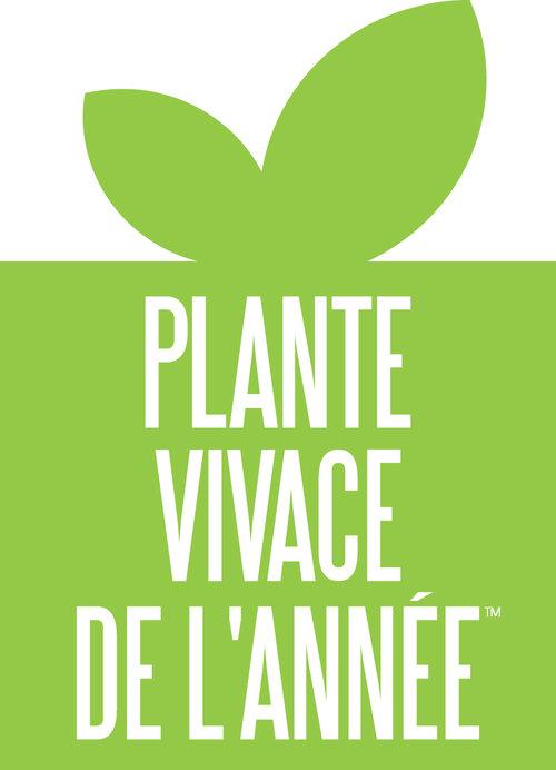 plante_vivace_de_lannee.jpg