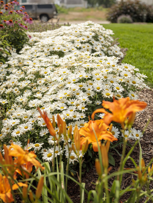 residential_gardens_171.jpg
