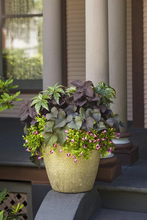 Shade Garden Patio Container
