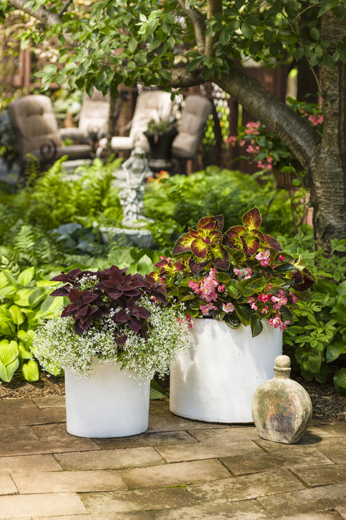 Shade Garden Patio Containers