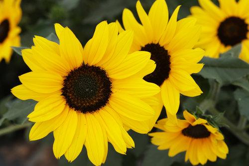 suncredibleyellow_0745.jpg