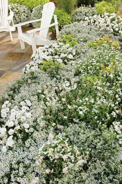 whitegarden13.jpg
