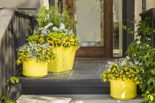 yellow_scene_06.jpg