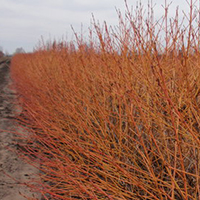 Growing Shrubs In Clay Soil Proven Winners