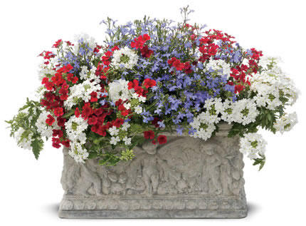 Patriotic flowers and combinations proven winners show your patriotic colors with these red white and blue plants and combinations for your containers and gardens then take a look at our patriotic mightylinksfo