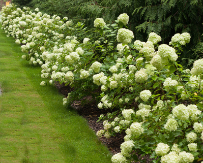 10 Great Shrubs To Use In Your Landscape!