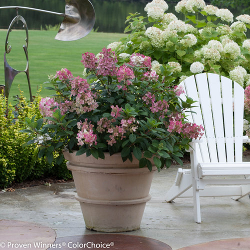 Can I Grow Shrubs In Containers? | Proven Winners