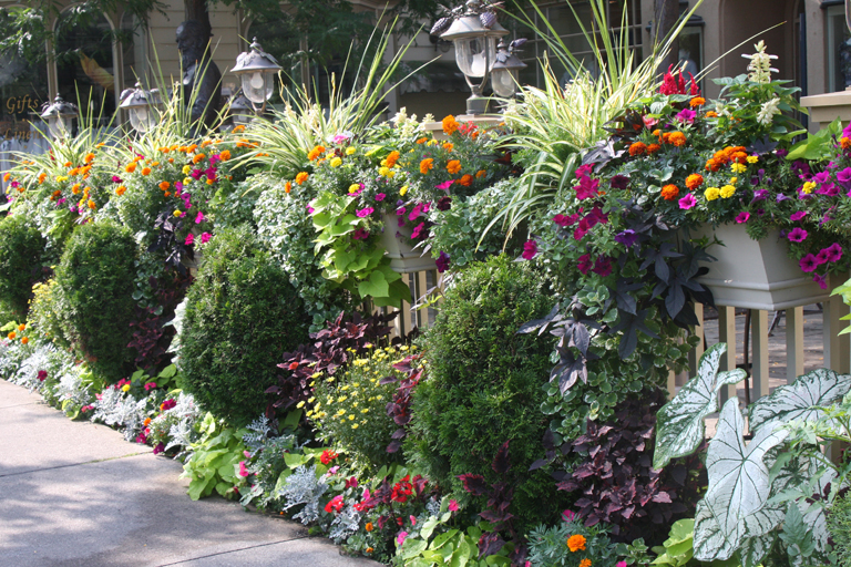 Could your town be as pretty as your garden proven winners could your town be as pretty as your garden mightylinksfo