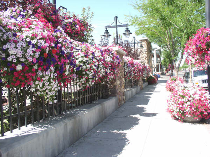Could Your Town Be As Pretty As Your Garden Proven Winners