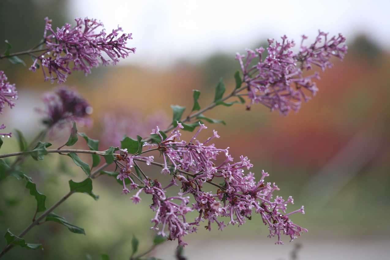 Why Plant In Fall Proven Winners
