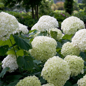 top 20 best selling shrubs for 2018 proven winners